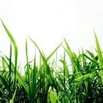 Grass, A Greener Festival